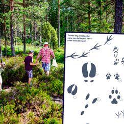 Sporjakt med barna – lek i naturen