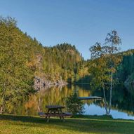 Skogstur Stampetjern, Dammyra og Bjørholen