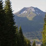 Saudehornet 1303 moh