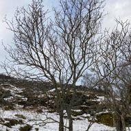 Kurs i beskjæring av busker og tre