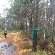Rundtur i Mykingskogen