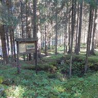 Stenhule i Bjørnstadhagan