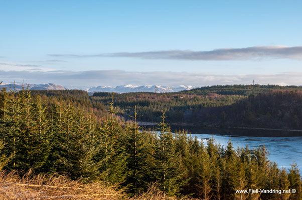 Skogsområde med vann bak