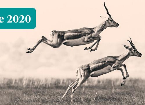 fd-gazellen-2020