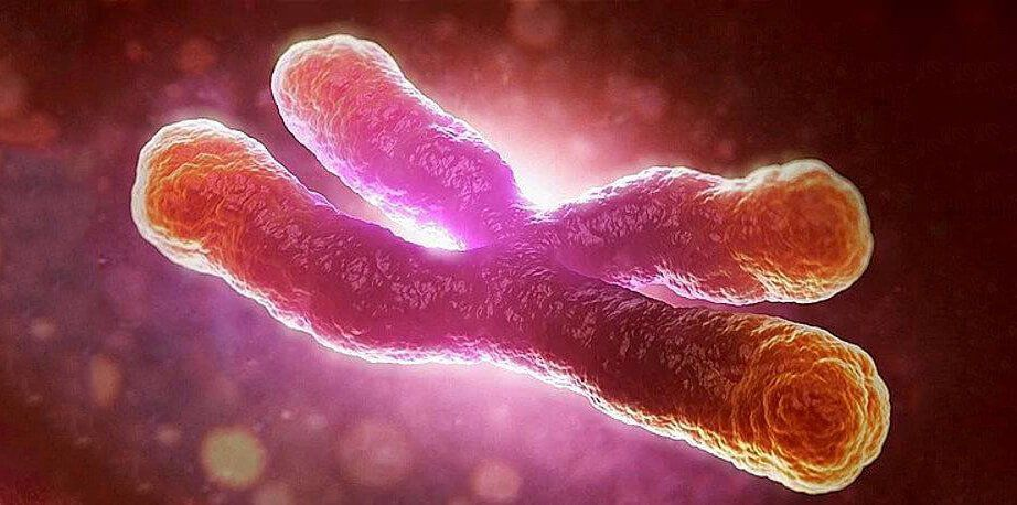 How Accurate is Telomere Testing
