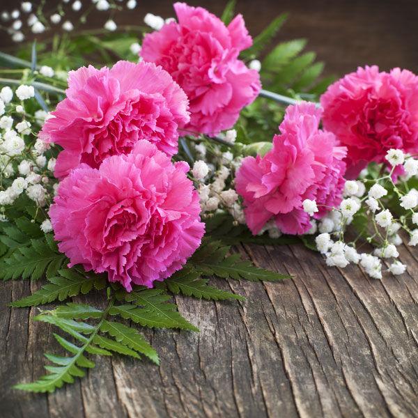carnation_growing-_manual_en