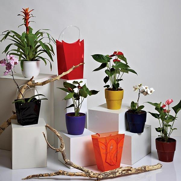 Pot Plants Catalog