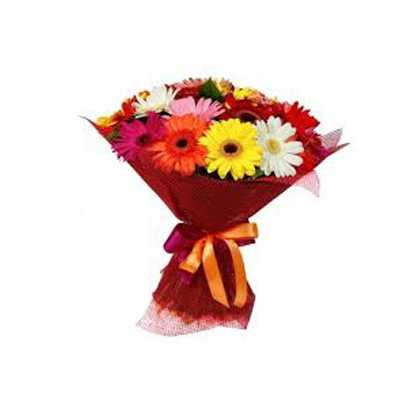 15 Gerberas in Red Tissue wrap