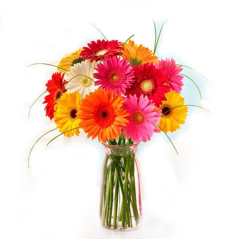 12 Gerberas in Vase
