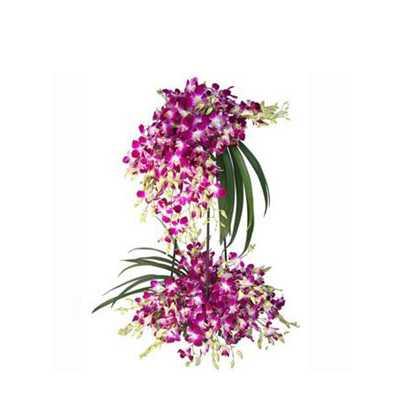 Orchids Desire