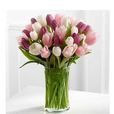 Coloured Hush Tulips