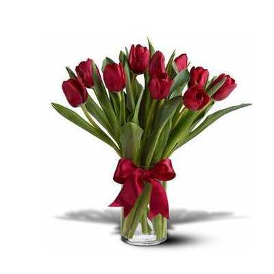 Vivid Red Tulips