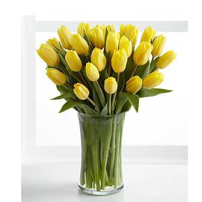 Optimistic Yellow Tulips