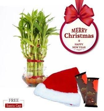 NG- Lucky Bamboo Two Layer Big Christmas Combo with Free Santa Cap