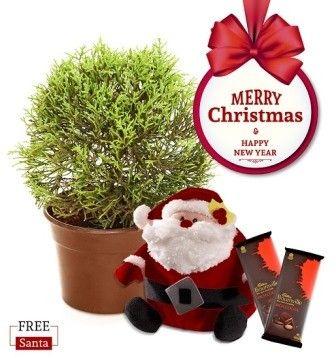 NG- Round Cypress Plant Christmas Combo with Free Santa