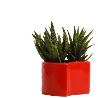 NG- Indoor Plant Succulant Ceramic Pot