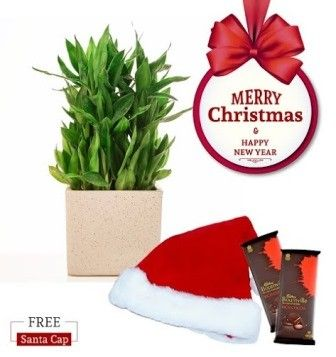 Nurturing Green Lucky Bamboo 3 layer Christmas Combo with Free Santa Cap