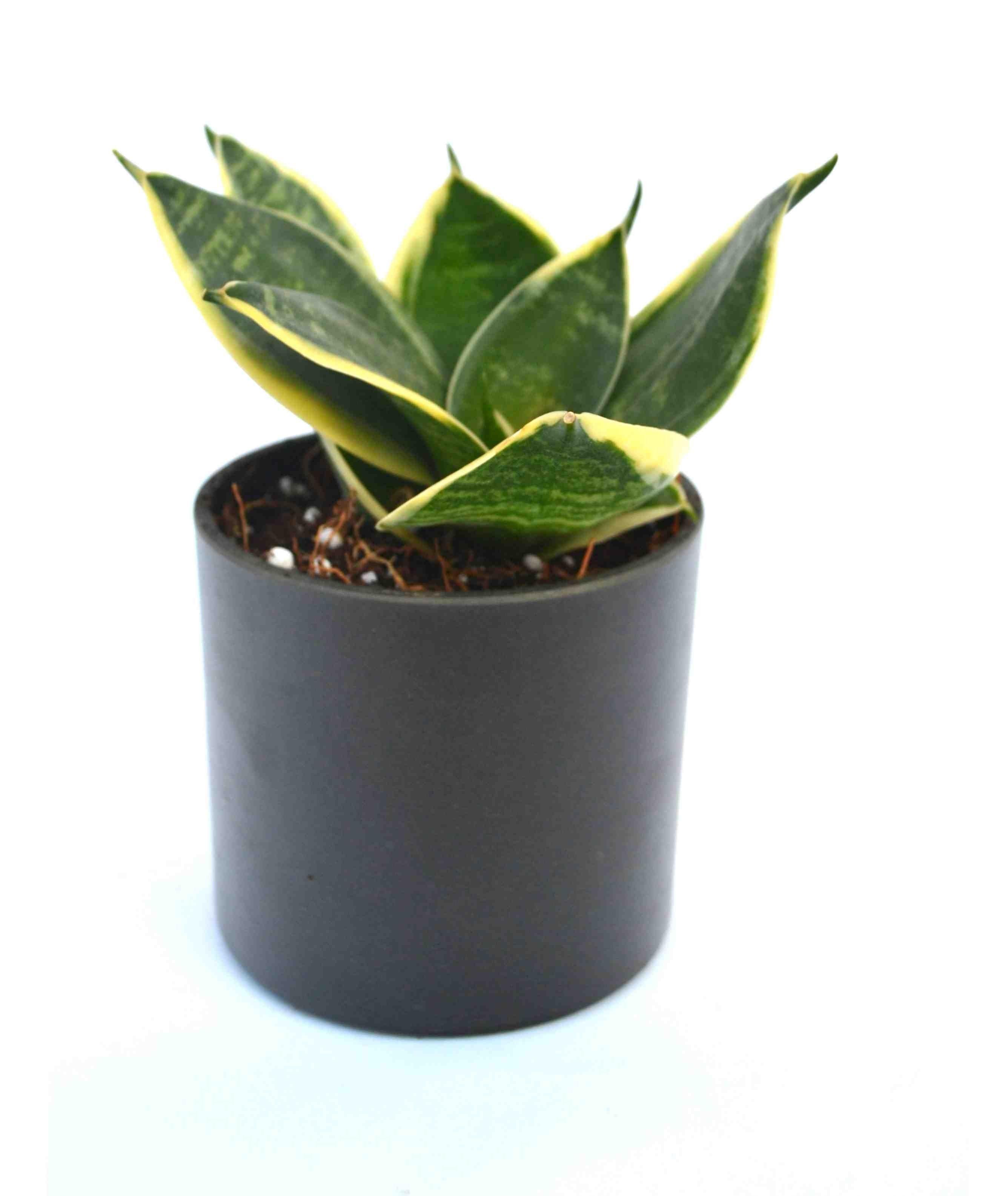 Milt Black Fibre Pot