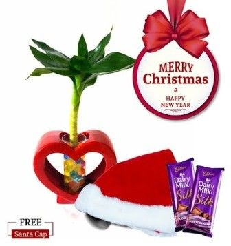 Nurturing Green Lotus Bamboo 3 In 1  Single Christmas Combo with Free Santa Cap