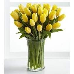 Optimistic Yellow Tulips