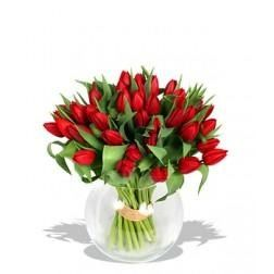 Passionate Red Tulips