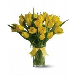 Radiant Yellow Tulips