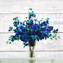 Rich Blue Orchids