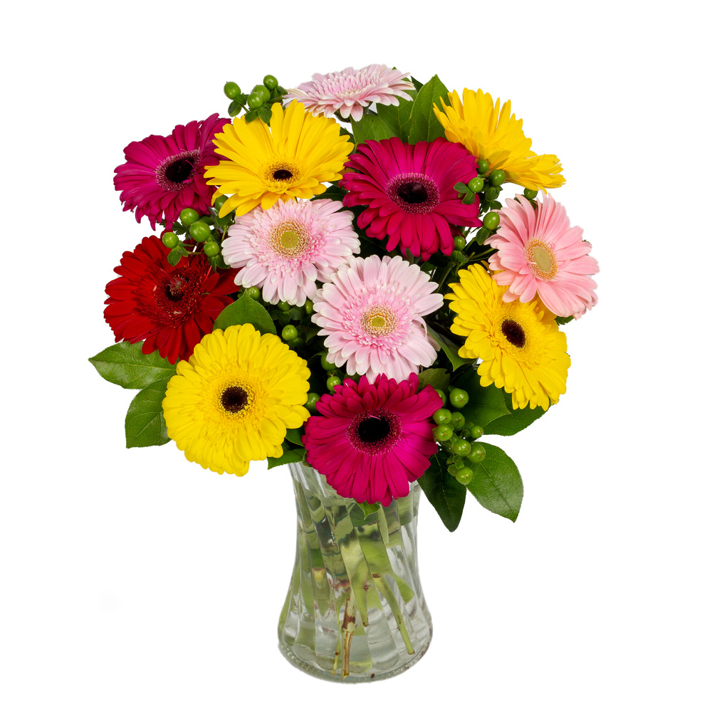 Simply Gerbs - Floral Arrangement