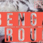 Bengal Rouge Papillon OPENING REVIEW