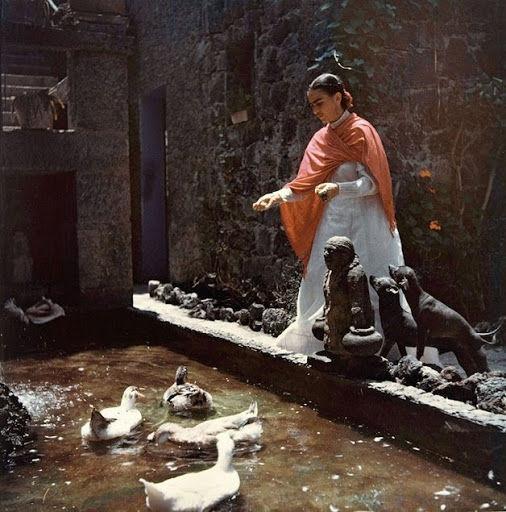 Frida teve diversos animais de estimação de diferentes espécies, como patos, um papagaio, uma águia, etc.