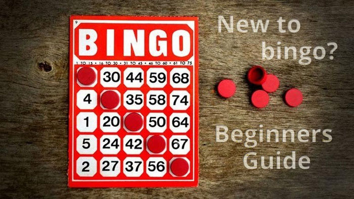 New to Playing Bingo Online? (Beginners Guide)