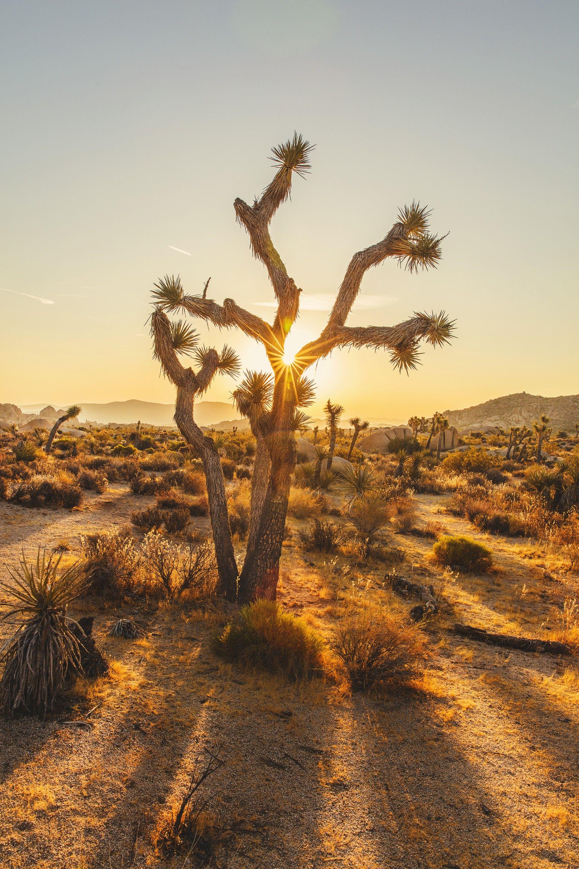 Desert Survival Tips 2