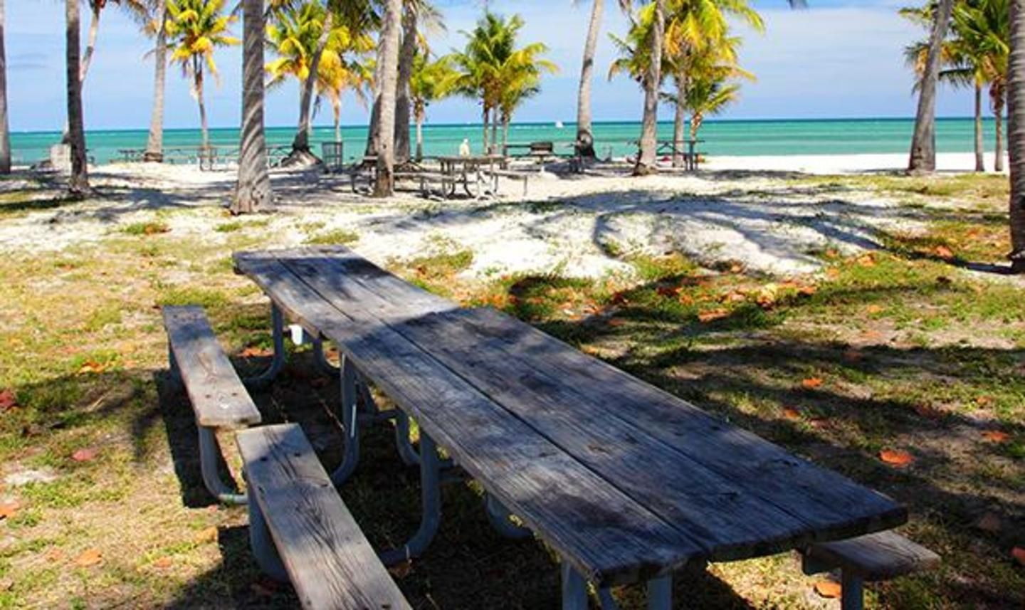 Crandon Park Picnic Tables with Beach View