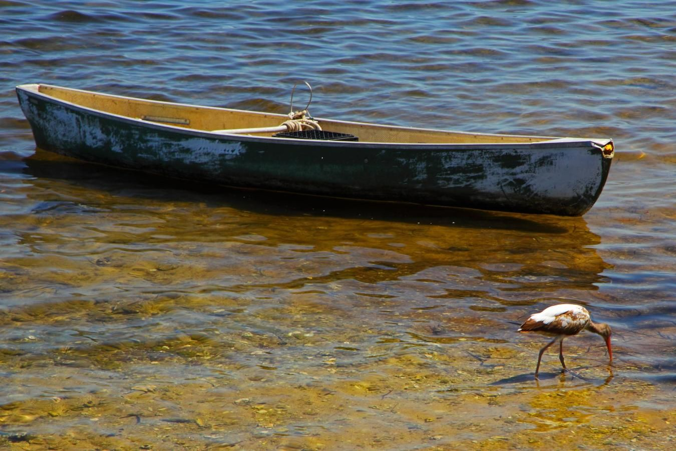 Peacock Park boat and bird