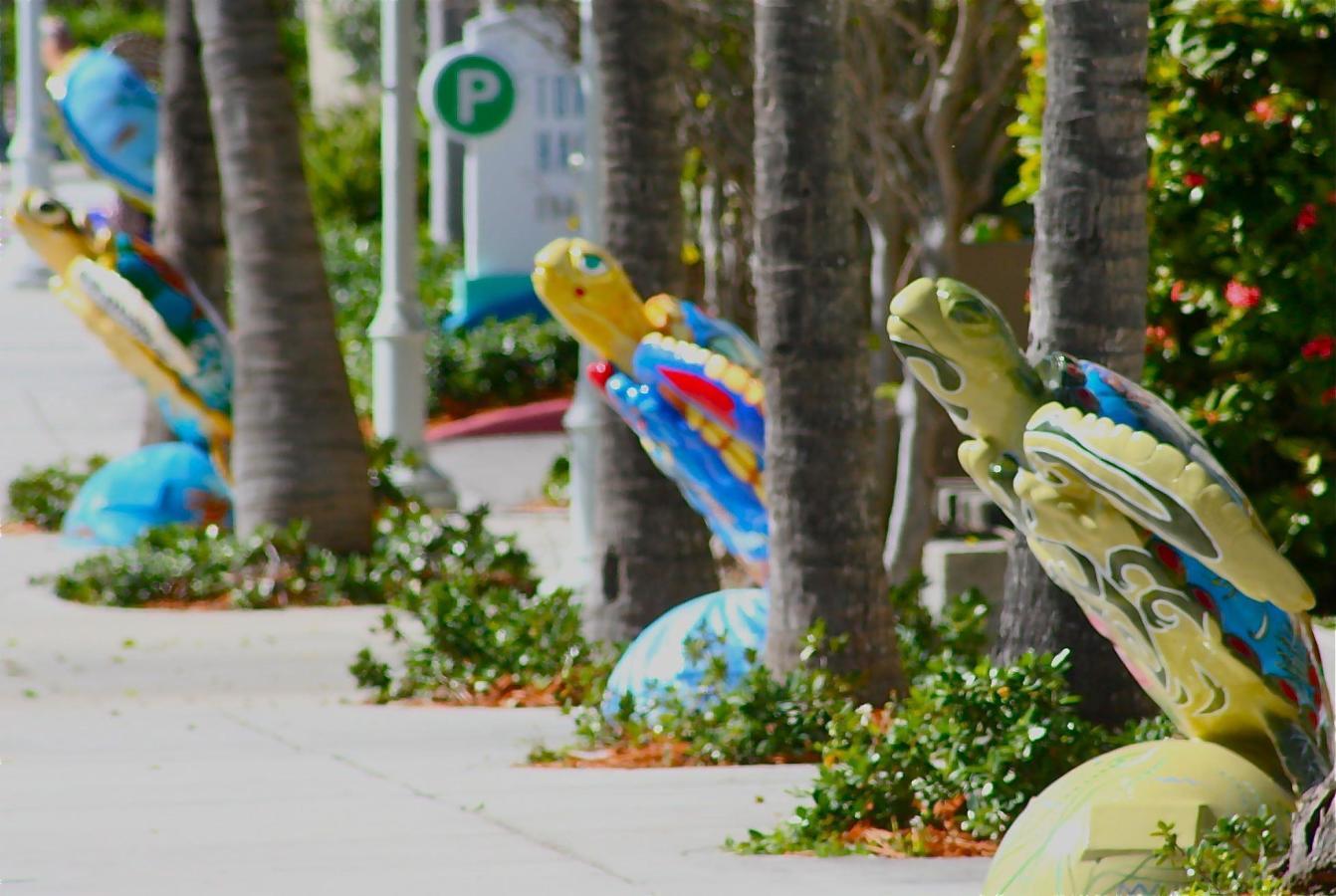 Surfside's Turtle Walk