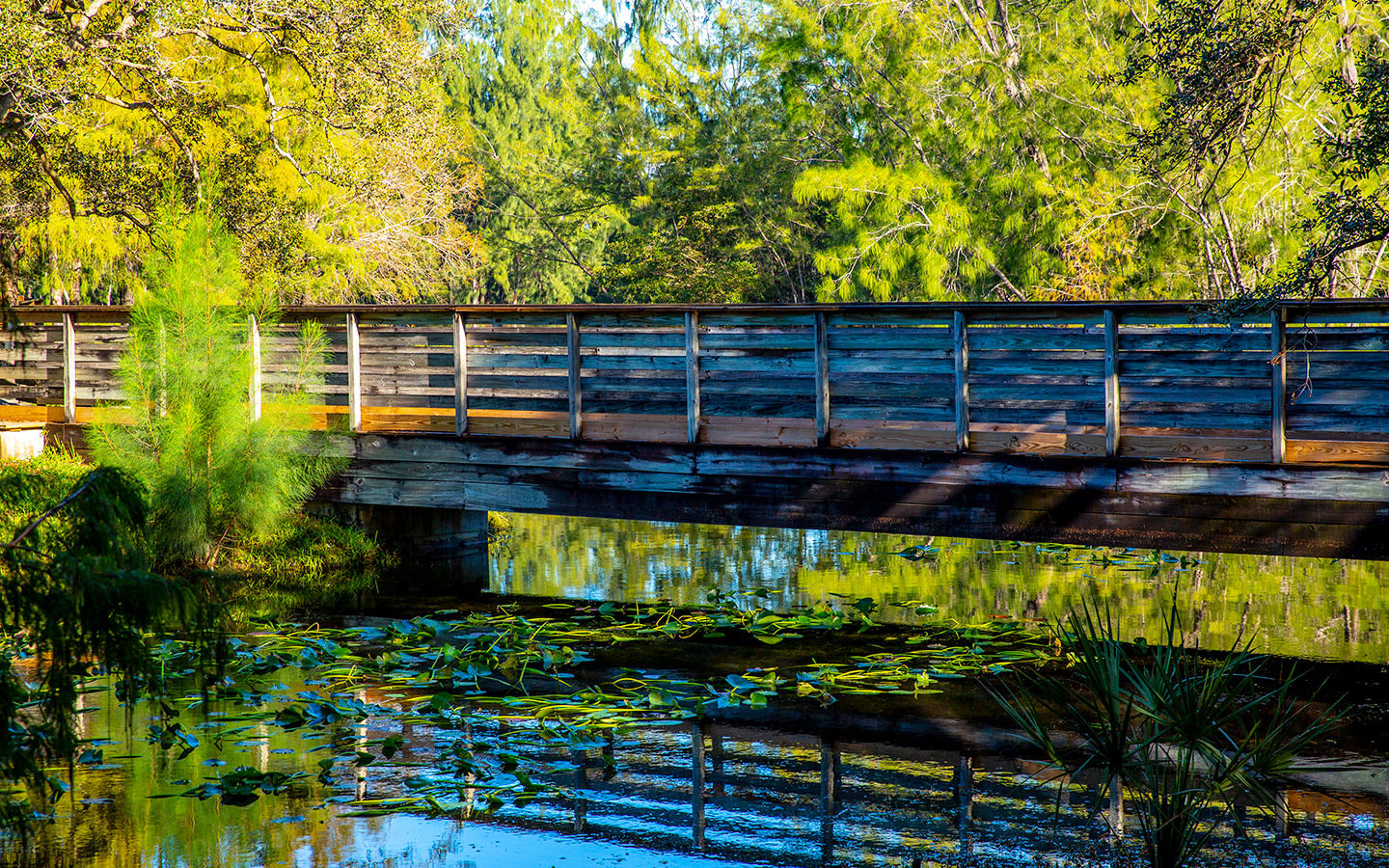 A bridge in Amelia Earhart Park