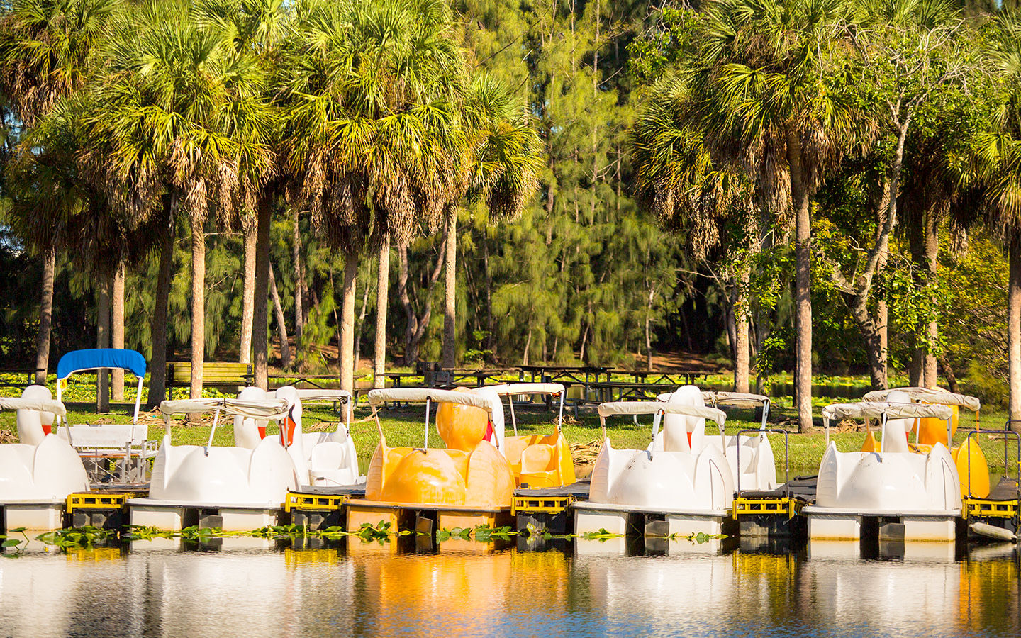 Rental paddle boats at Amelia Earhart Park