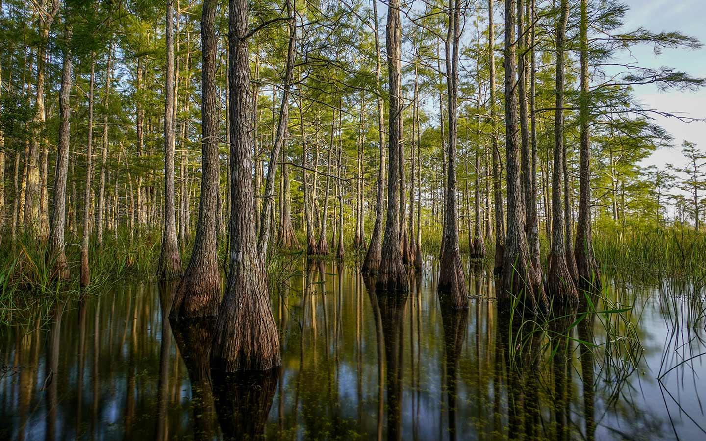 Reserva Nacional Big Cypress