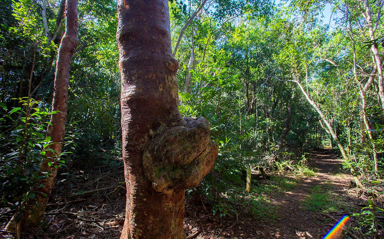 Tree bark growth