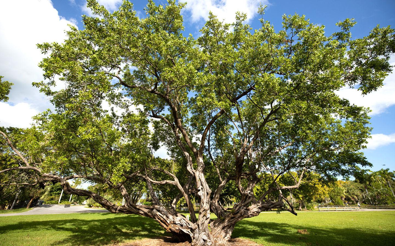 A tree in Crandon Park