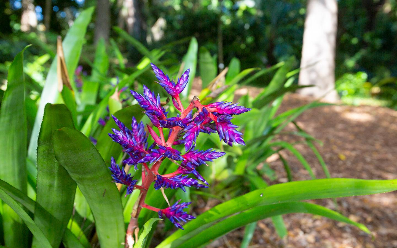 Tropical garden flower