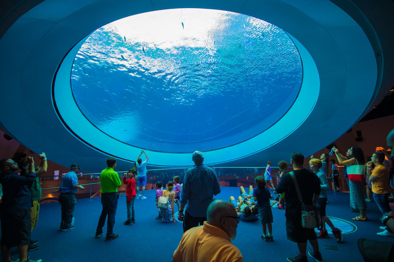El acuario de oculus
