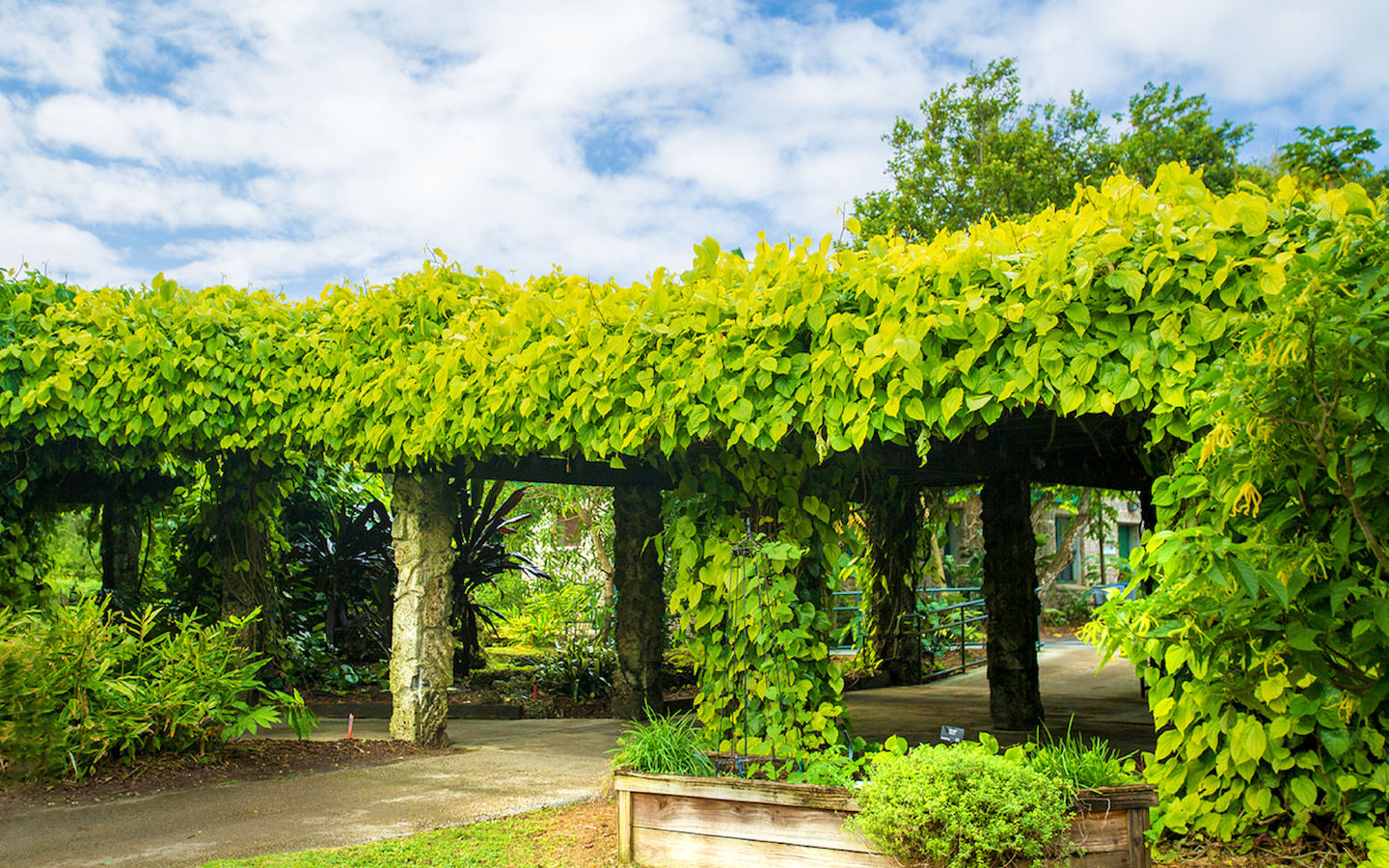 Ivy covered structure at Fruit & Spice Park