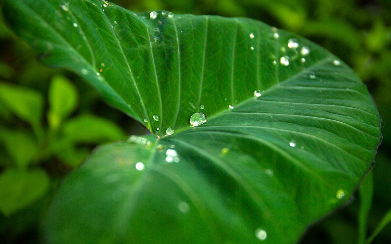 Enjoy the Tropical Plants