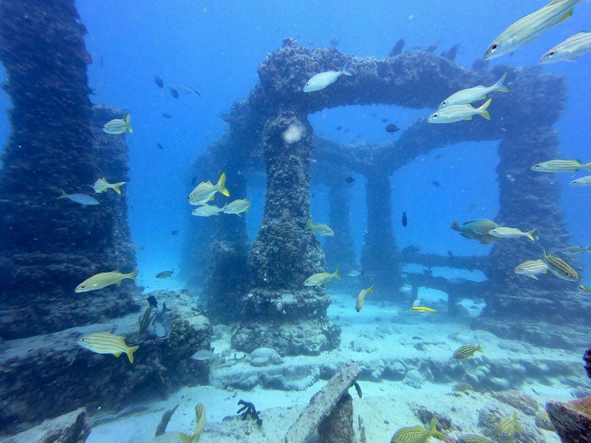 Yellow Fish and Pillar