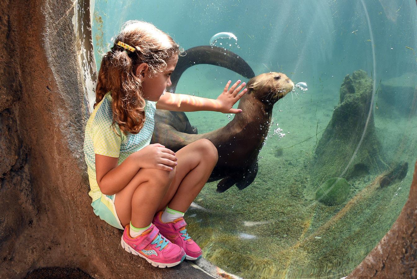 Lontra de rio gigante