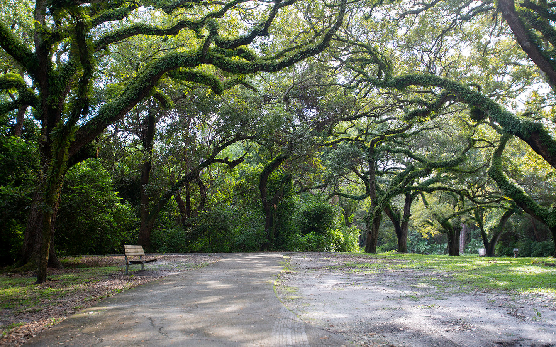 Hammock pathway in Greynolds Park