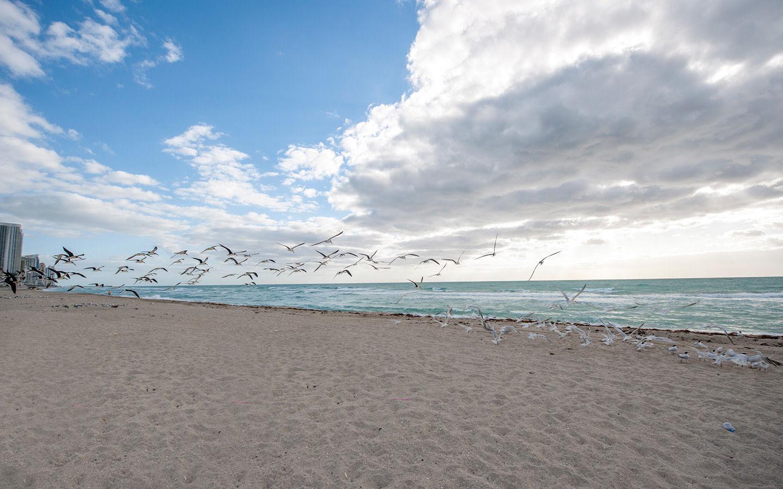 Mouettes sur Haulover Beach