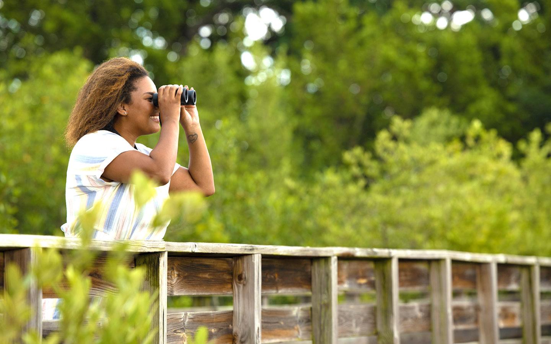 A observação de pássaros é muito popular na histórica Virginia KeyBeach Parque