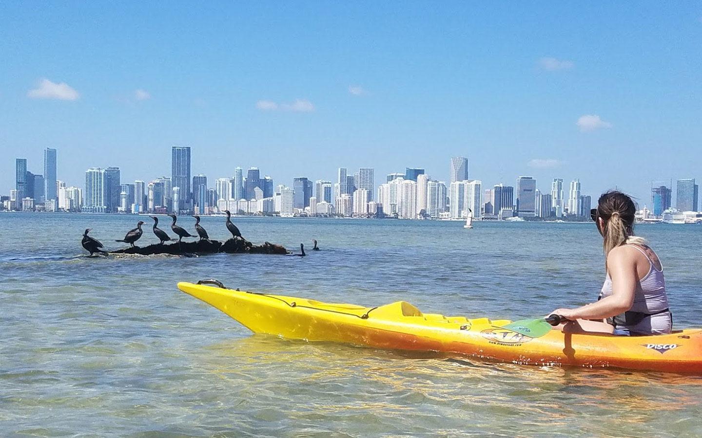 Kayak and group of Anhingas